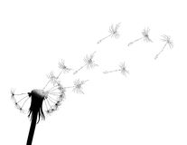 Blow dandelion Royalty Free Stock Images