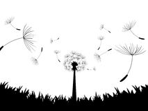Blow Dandelion. Directly below. Vector. Illustration Royalty Free Stock Image