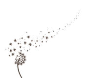 Blow Dandelion. Florals and butterflies vector silhouette for design Royalty Free Stock Photo