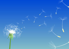 Blow Dandelion. Vector Stock Photo