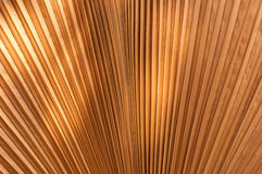 Blow dry palm leaves brown. Royalty Free Stock Photos