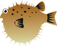 Blow Fish Stock Photo