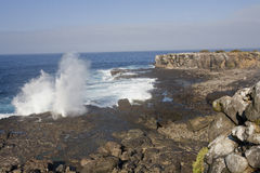 Blow hole galapagos Royalty Free Stock Images