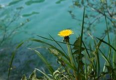 blowball στη λίμνη Στοκ φωτογραφία με δικαίωμα ελεύθερης χρήσης