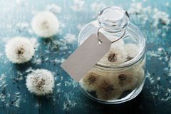 Blowball or dandelion in wishing jar with paper tag, rustic teal background, make a wish concept, unusual gift or present. Blowball or dandelion in jar with Stock Photography