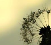 Blowball de Sun Imagenes de archivo