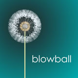 Blowball Royalty Free Stock Photography