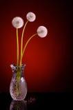 3 blowballs одуванчика красного Стоковое Изображение RF