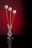 Blowballs одуванчика красные Стоковая Фотография