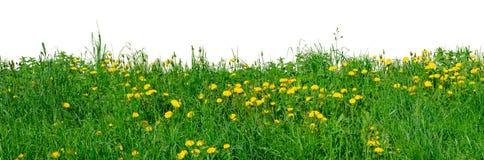 поле blowballs Стоковая Фотография