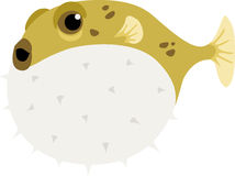 blowfish Zdjęcia Royalty Free