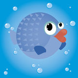 Blowfish Stock Images