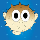 Blowfish Stock Photos