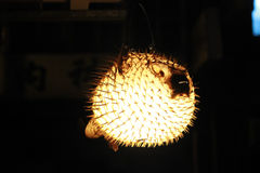 Blowfish Lantern lighting up the streets Royalty Free Stock Images