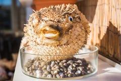 Blowfish o pescados del fumador en tienda de souvenirs Pescados de puerco espín fotografía de archivo