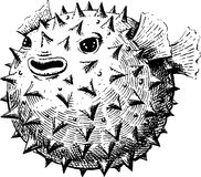 Blowfish Stock Photos