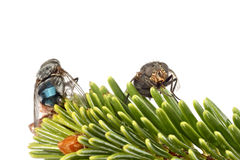 Blowfly Stock Images