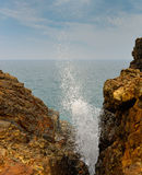 Blowhole Royalty Free Stock Images