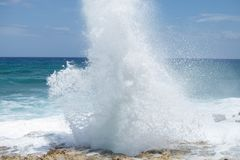 Blowhole Stock Images