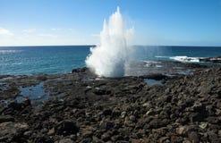 Blowhorn dans Kauai, Hawaï Images libres de droits