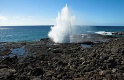Blowhorn in Kauai, Hawai Immagini Stock Libere da Diritti