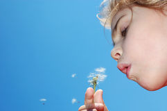 Blowing away dandelion seeds Royalty Free Stock Images