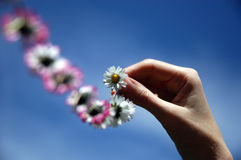 Blowing daisy chain Royalty Free Stock Photography