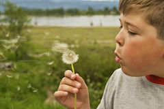 Blowing On A Dandelion. A carefree boy blowing on a dandelion during a summer day Royalty Free Stock Image