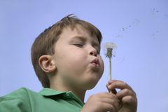 Blowing a dandelion Stock Image