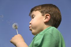 Blowing a dandelion stock photos