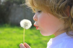 Blowing a dandelion. Small boy blowing a dandelion flower Stock Photography