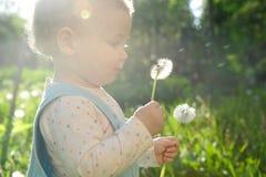 Blowing on dandelion. Little baby girl blowing on dandelion. Sunlight effect royalty free stock photos