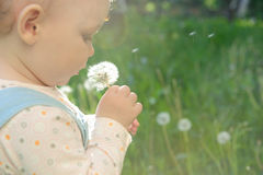 Blowing on dandelion Royalty Free Stock Photo
