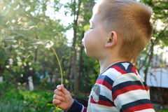 Blowing on dandelion Royalty Free Stock Image