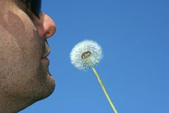Blowing Dandelion Stock Photography