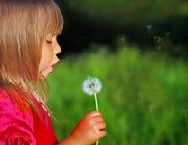 Blowing dandelion. Cute little girl blow dandelion on a meadow Royalty Free Stock Photos