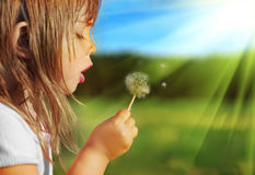 Blowing Dandelion Stock Photos