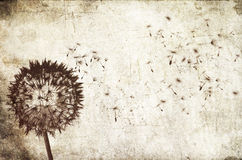 Blowing dandelion background Royalty Free Stock Photo