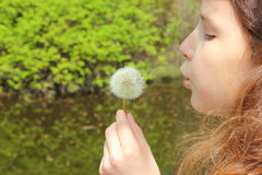 Blowing on a dandelion. Child blowing a dandelion deflorate. bokeh. nature background stock photo
