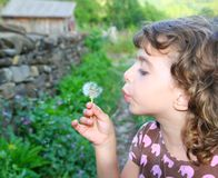 Blowing dandelion girl in rural green outdoor Stock Images