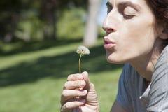 Blowing dandelion plant Stock Image