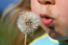 Blowing dandelion seeds. Little girl blowing dandelion seeds - closeup, shallow depth of field royalty free stock photos
