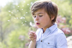 Blowing Dandelion Seeds Away Royalty Free Stock Photo