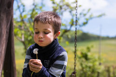 Blowing Dandelion Seeds in the Wind Stock Photos