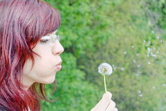 Blowing dandelion Royalty Free Stock Image