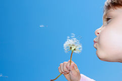 Blowing dandelions away royalty free stock photos