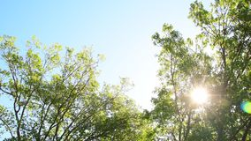 Blowing trees. Trees blowing with beautiful sky at sunset Stock video stock footage