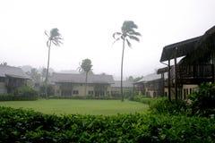 Blowing trees on Kauai. Blowing trees in a rain storm, on Kauai island, Hawaii stock photography