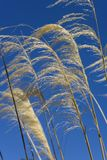 Blowing In The Wind Royalty Free Stock Images