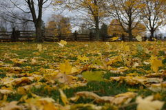 Blowing in the Wind. Photo of the fallen autumn leaves blowing in the wind Stock Photography